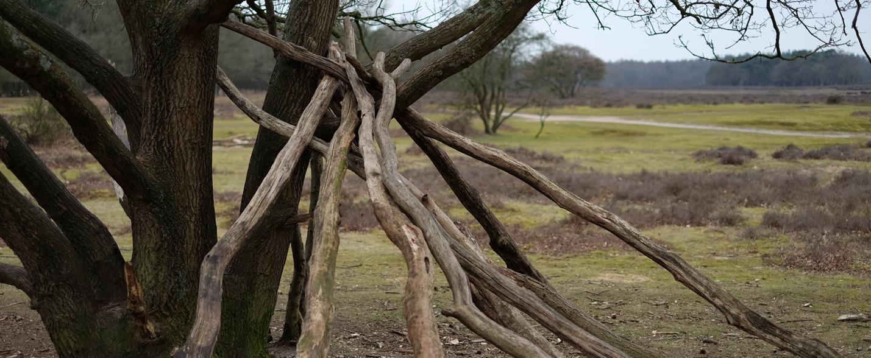 vos-uitvaart-heide-bos